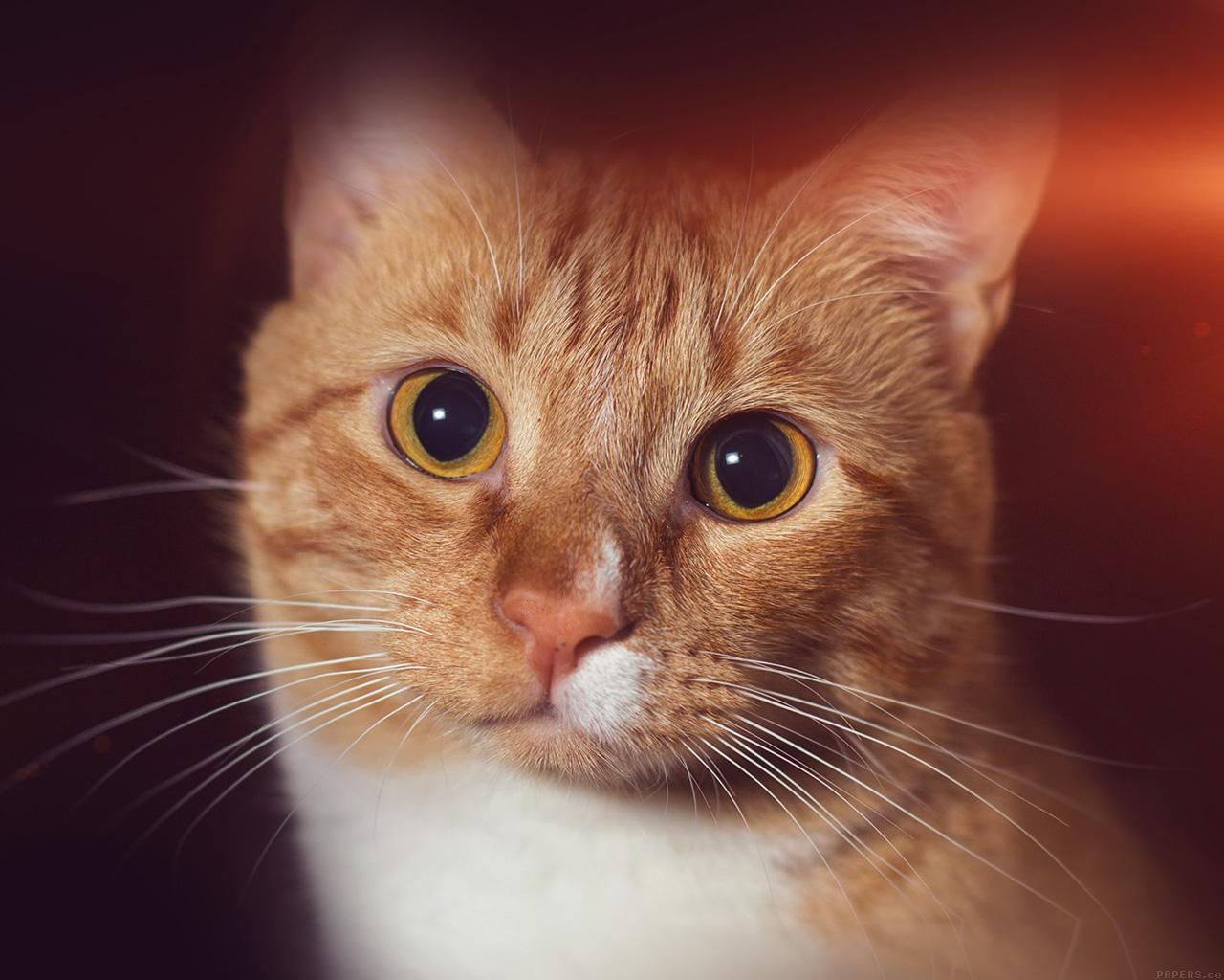 Wallpaper For Desktop Laptop Mr33 Cat Face Eye Animal