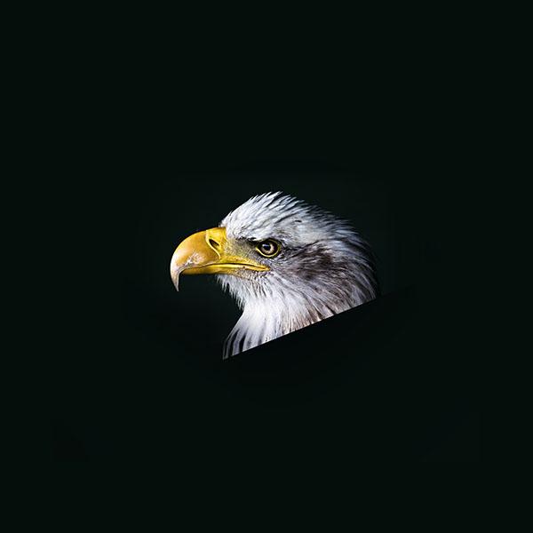 iPapers.co-Apple-iPhone-iPad-Macbook-iMac-wallpaper-mr64-eagle-dark-animal-bird-face-wallpaper