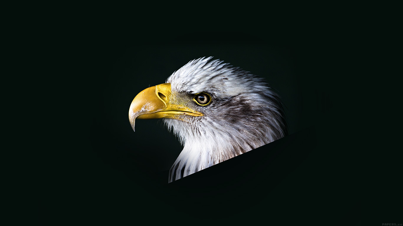 desktop-wallpaper-laptop-mac-macbook-airmr64-eagle-dark-animal-bird-face-wallpaper