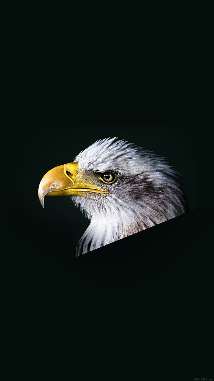 iPhone6papers.co-Apple-iPhone-6-iphone6-plus-wallpaper-mr64-eagle-dark-animal-bird-face