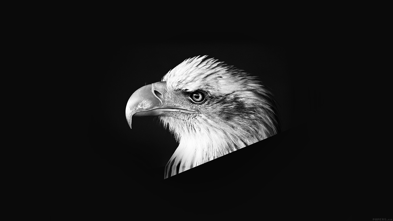 desktop-wallpaper-laptop-mac-macbook-air-mr65-eagle-dark-animal-bird-face-bw-wallpaper