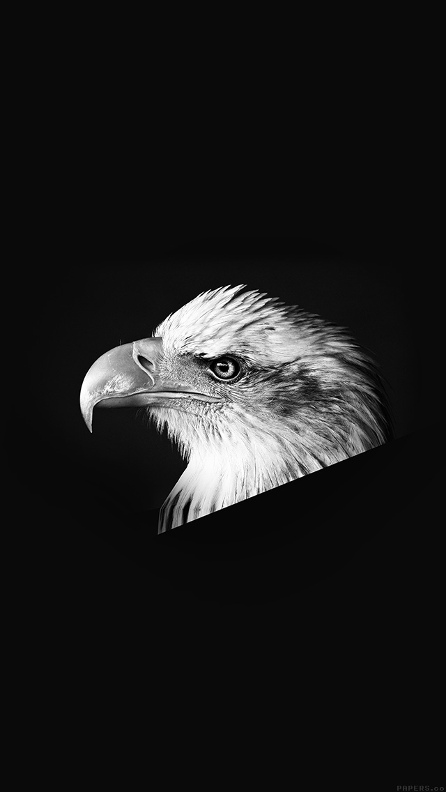 freeios8.com-iphone-4-5-6-plus-ipad-ios8-mr65-eagle-dark-animal-bird-face-bw