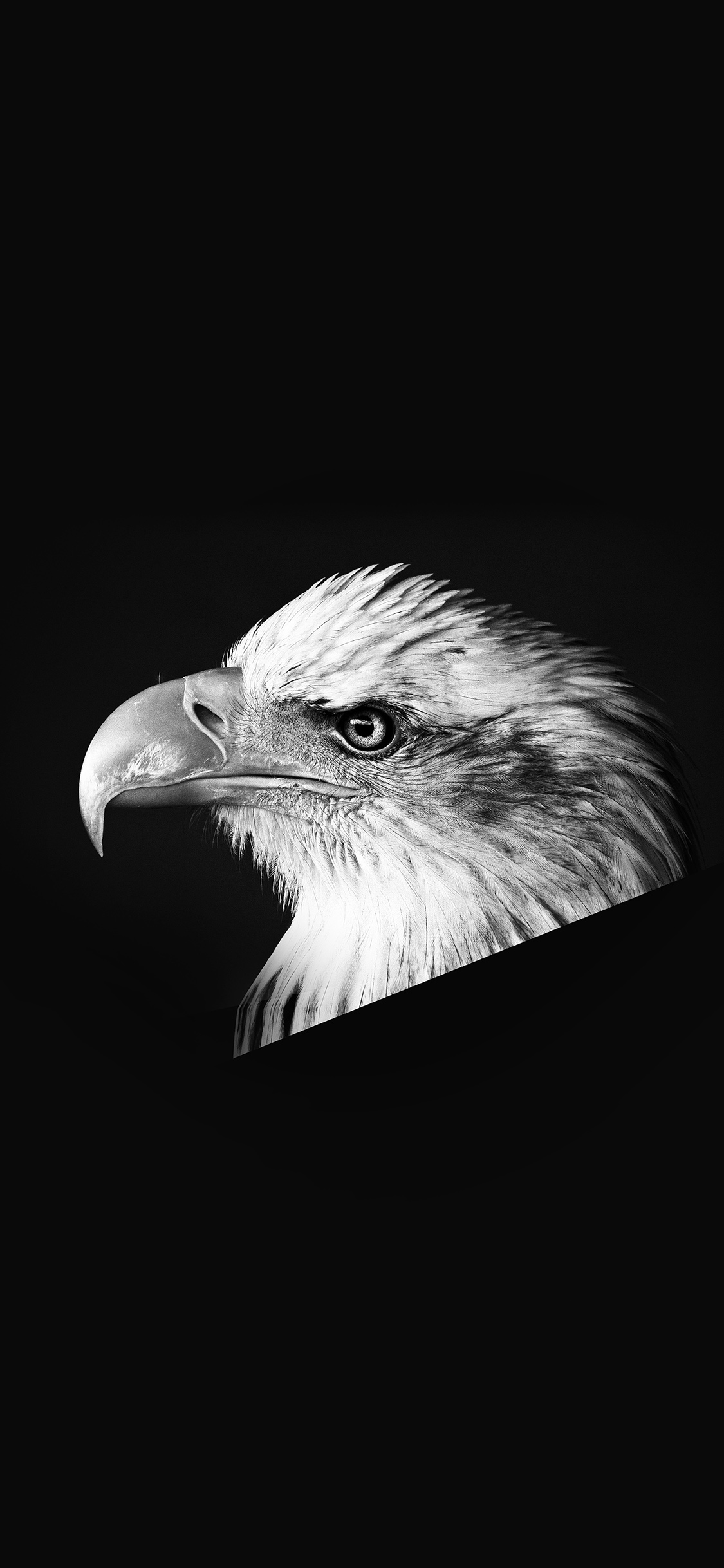 iPhoneXpapers.com-Apple-iPhone-wallpaper-mr65-eagle-dark-animal-bird-face-bw
