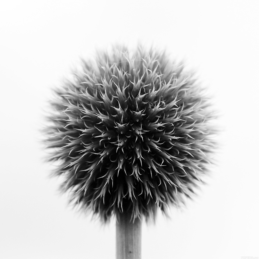 android-wallpaper-mr72-ball-flower-circle-nature-bw-wallpaper