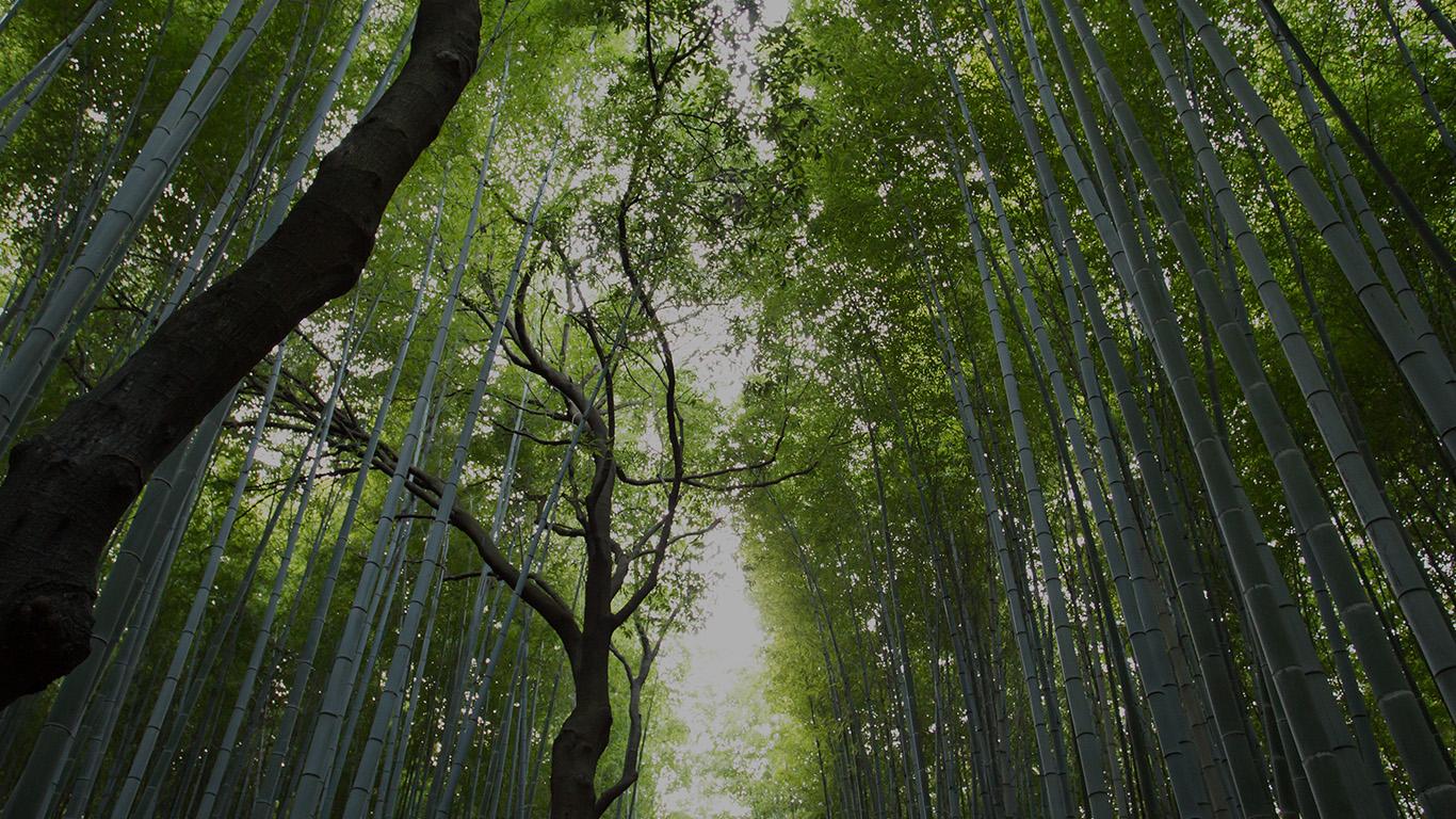 desktop-wallpaper-laptop-mac-macbook-airmr94-tree-walk-street-nature-mountain-air-wallpaper