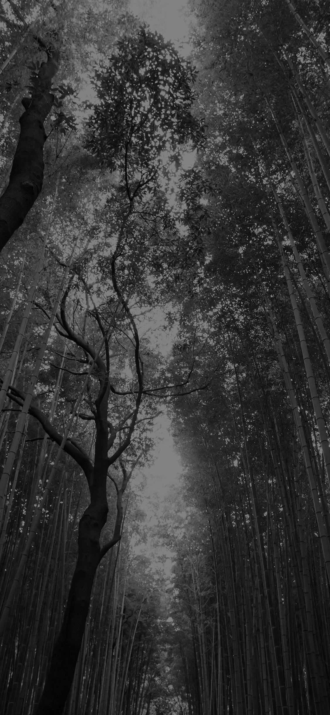 Iphonepapers Com Iphone 8 Wallpaper Mr96 Tree Walk Street Nature