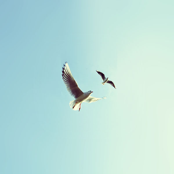 iPapers.co-Apple-iPhone-iPad-Macbook-iMac-wallpaper-ms08-pigeons-bird-fly-sky-animal-nature-minimal-wallpaper