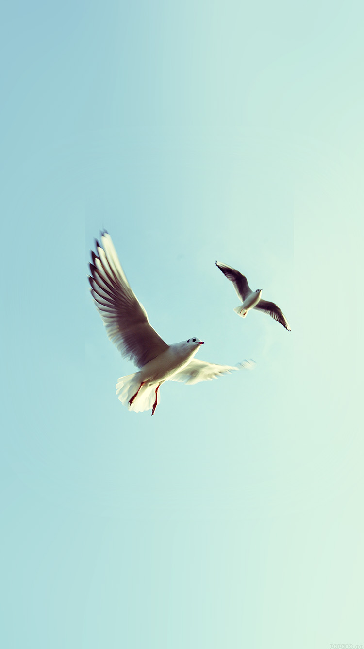 iPhone6papers.co-Apple-iPhone-6-iphone6-plus-wallpaper-ms08-pigeons-bird-fly-sky-animal-nature-minimal