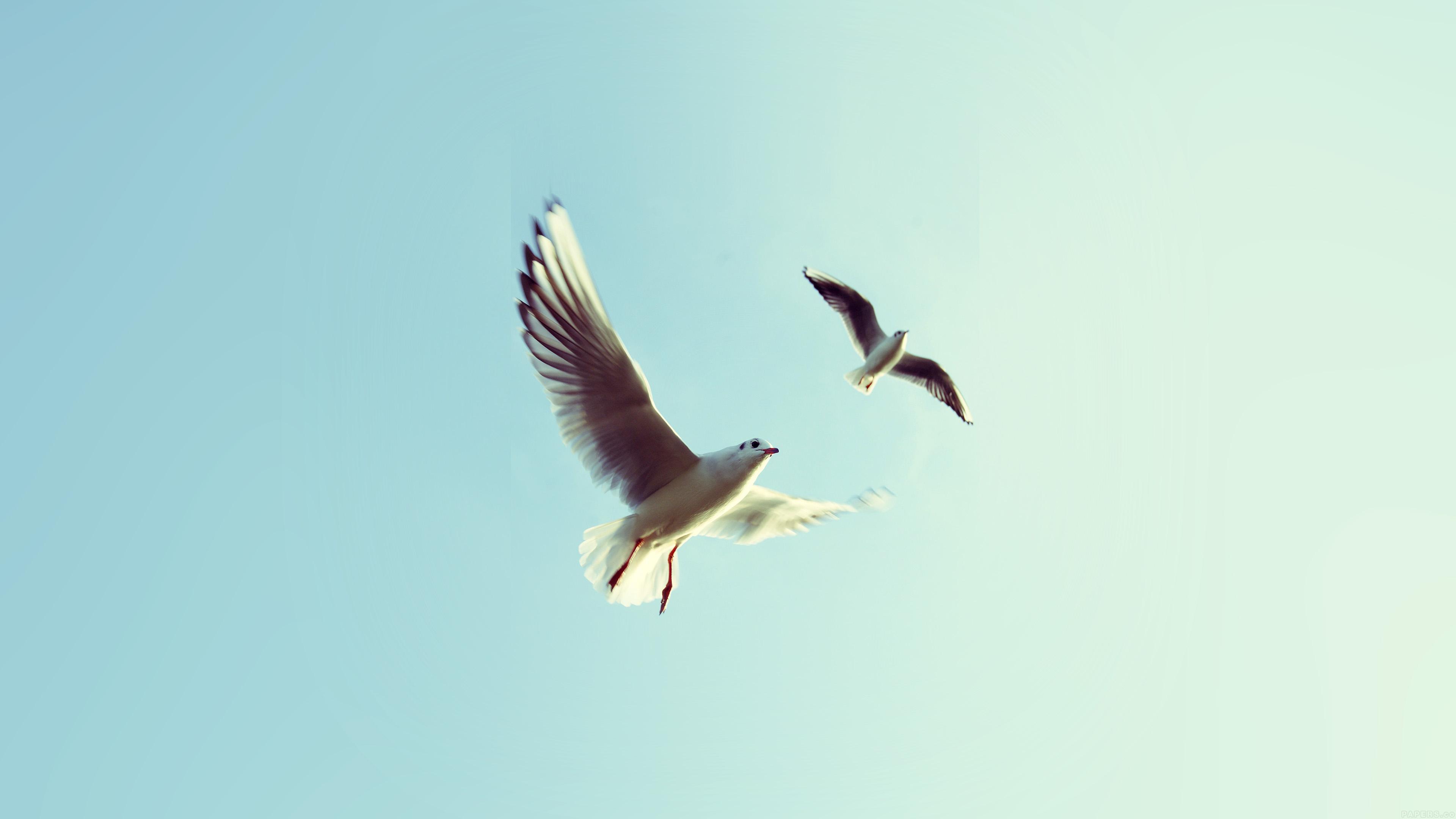 Wallpapers Hd Flying Birds Apple Animals Blue Sky Desktop: 3840 X 2400