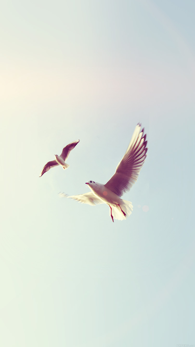 iPhonepapers.com-Apple-iPhone8-wallpaper-ms09-pigeons-bird-fly-sky-animal-nature-minimal-flare