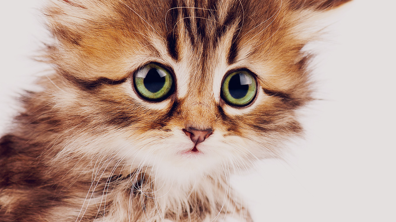 desktop-wallpaper-laptop-mac-macbook-airms23-sad-kitten-cat-animal-nature-cute-wallpaper