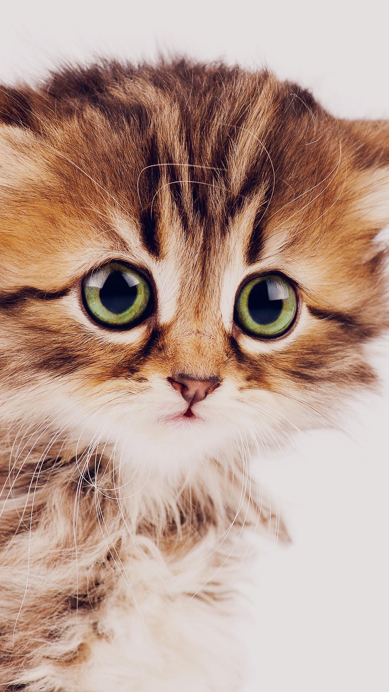 iphone7papers - ms23-sad-kitten-cat-animal-nature-cute