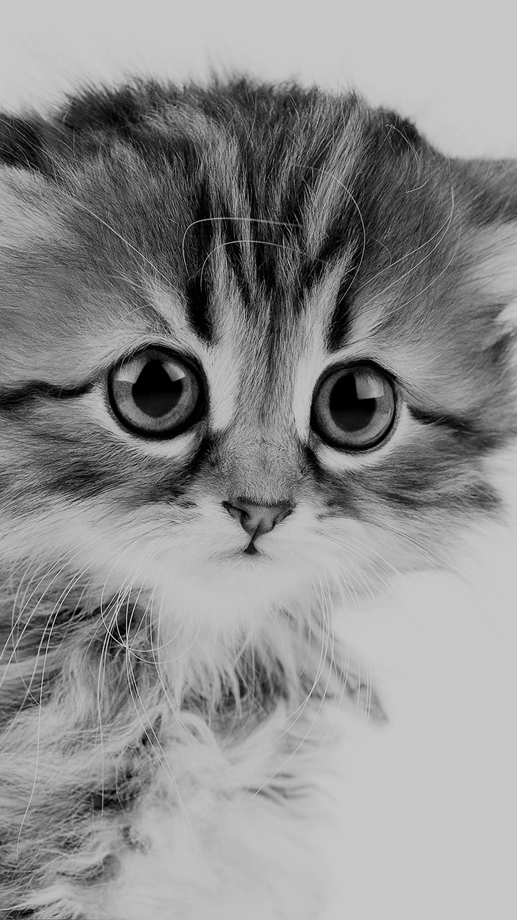 iPhonepapers.com-Apple-iPhone8-wallpaper-ms24-sad-kitten-cat-animal-nature-cute-bw-dark
