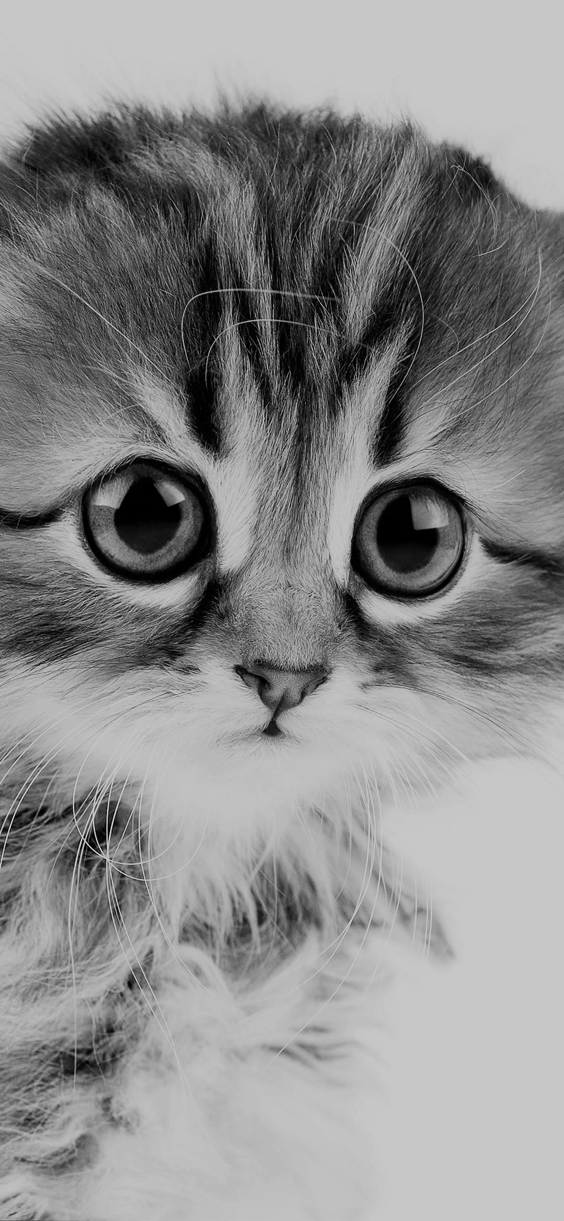 Iphonexpapers Com Iphone X Wallpaper Ms24 Sad Kitten Cat Animal Nature Cute Bw Dark