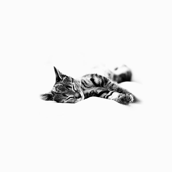iPapers.co-Apple-iPhone-iPad-Macbook-iMac-wallpaper-ms25-sleepy-cat-kitten-white-animal-wallpaper