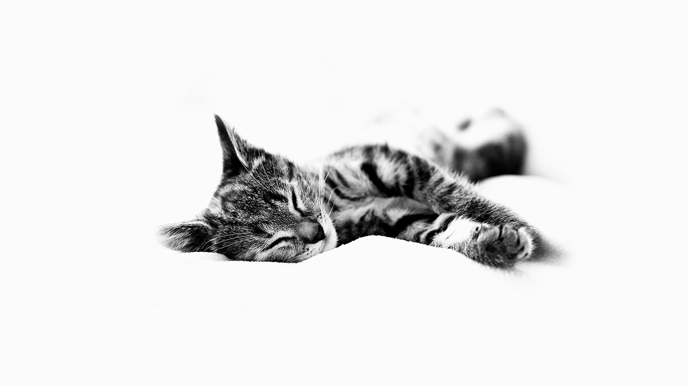 desktop-wallpaper-laptop-mac-macbook-airms25-sleepy-cat-kitten-white-animal-wallpaper