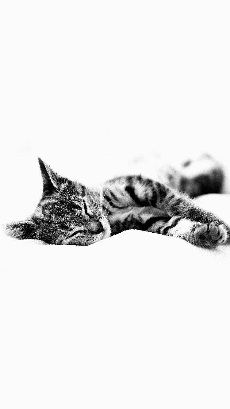 iPhone6papers.co-Apple-iPhone-6-iphone6-plus-wallpaper-ms25-sleepy-cat-kitten-white-animal