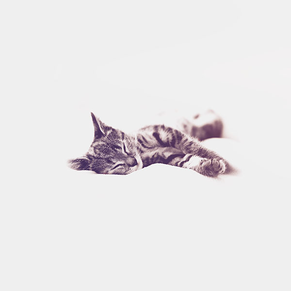 Cat Wallpapers For Iphone: Papers.co Wallpapers By Ninanino