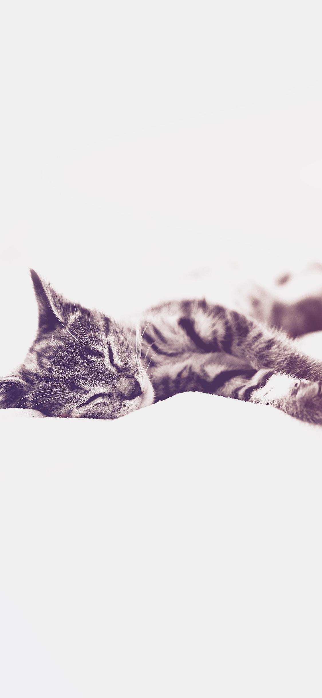 iPhoneXpapers.com-Apple-iPhone-wallpaper-ms26-sleepy-cat-kitten-white-animal-blue