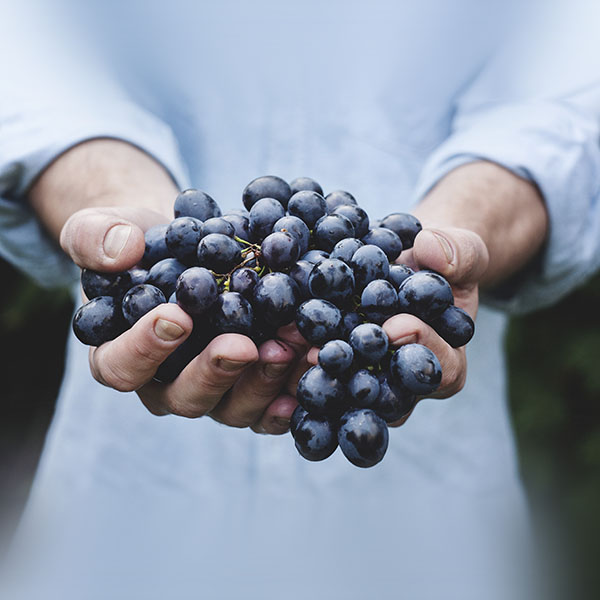 iPapers.co-Apple-iPhone-iPad-Macbook-iMac-wallpaper-ms41-farmer-food-grapes-fruit-nature-bokeh-wallpaper