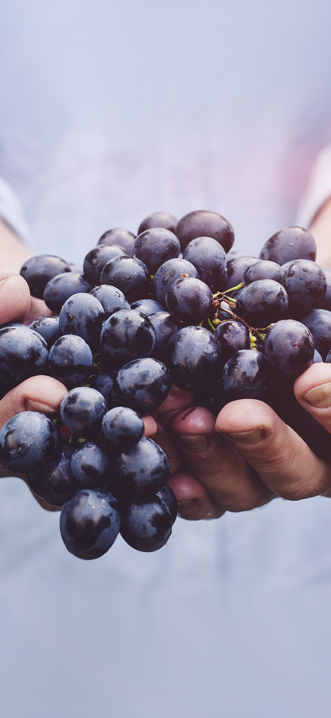 iPhonexpapers.com-Apple-iPhone-wallpaper-ms42-farmer-food-grapes-fruit-nature-bokeh-flare