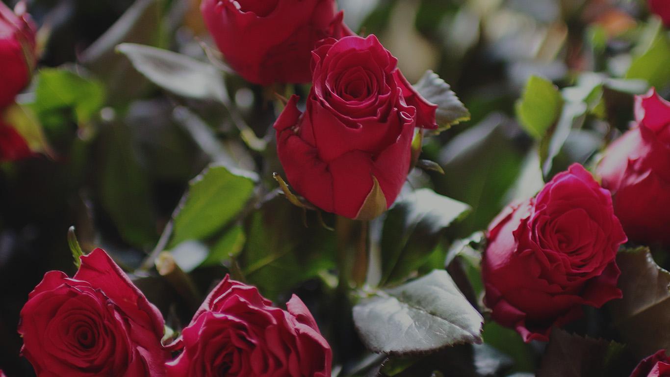 desktop-wallpaper-laptop-mac-macbook-air-ms45-rose-flower-gift-red-nature-dark-wallpaper