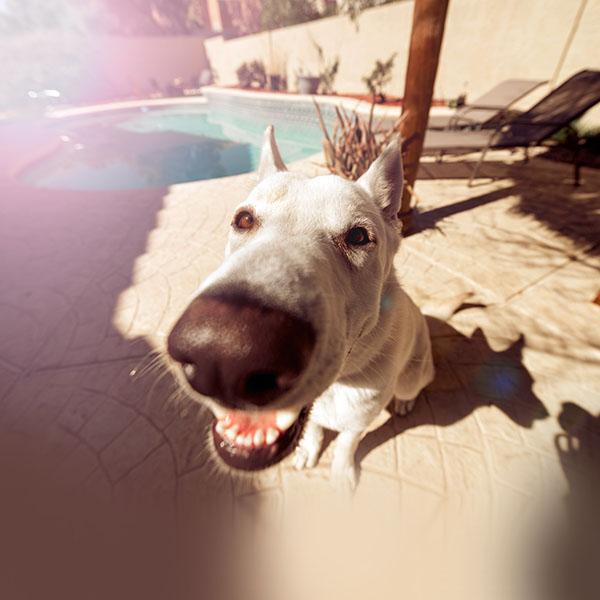 iPapers.co-Apple-iPhone-iPad-Macbook-iMac-wallpaper-ms62-dog-cute-face-animal-nature-nose-wallpaper