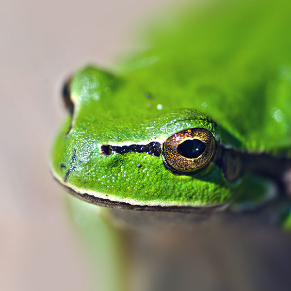iPapers.co-Apple-iPhone-iPad-Macbook-iMac-wallpaper-ms78-eyes-frog-animal-lake-nature-wallpaper