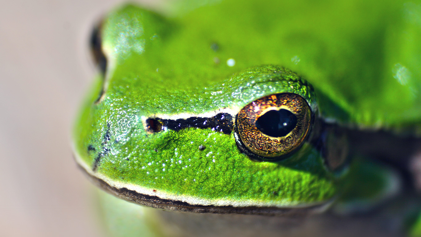 desktop-wallpaper-laptop-mac-macbook-airms78-eyes-frog-animal-lake-nature-wallpaper