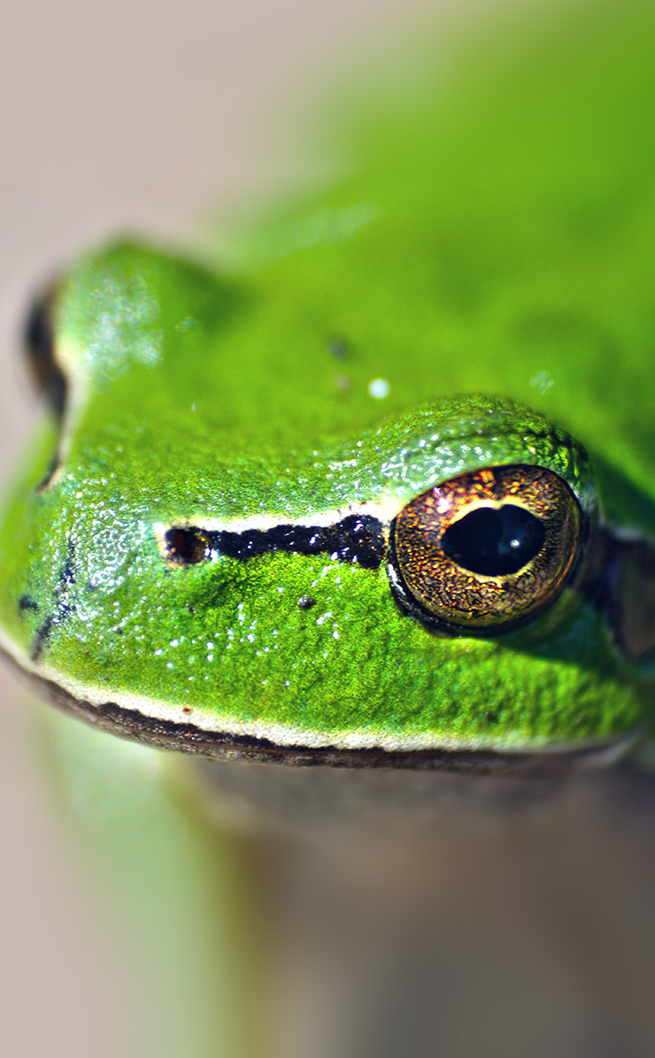 frogs essay Essays from bookrags provide great ideas for frog dissection essays and paper topics like essay view this student essay about frog dissection.