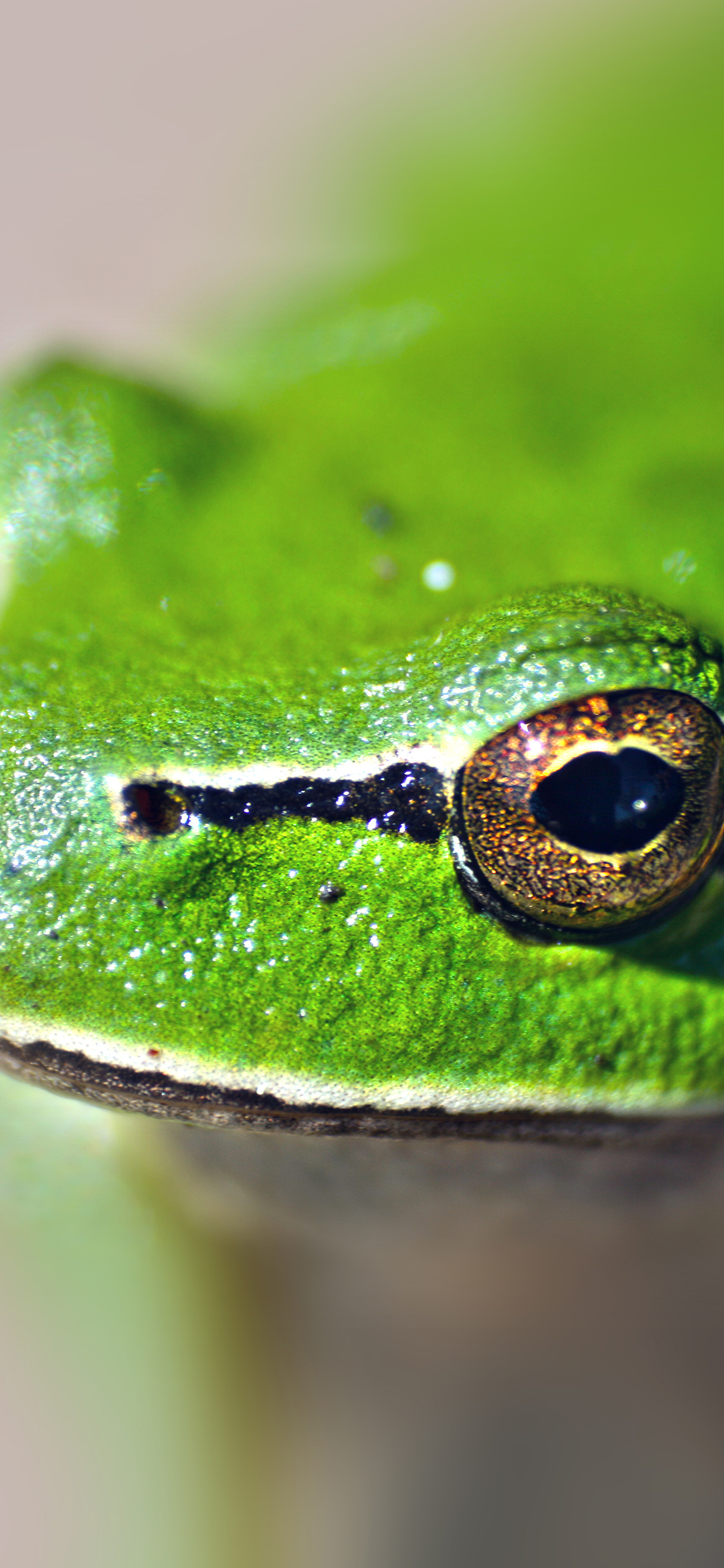 iPhoneXpapers.com-Apple-iPhone-wallpaper-ms78-eyes-frog-animal-lake-nature