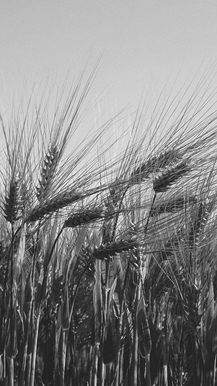 iPhone7papers.com-Apple-iPhone7-iphone7plus-wallpaper-mt06-flower-reed-food-nature-bw-dark