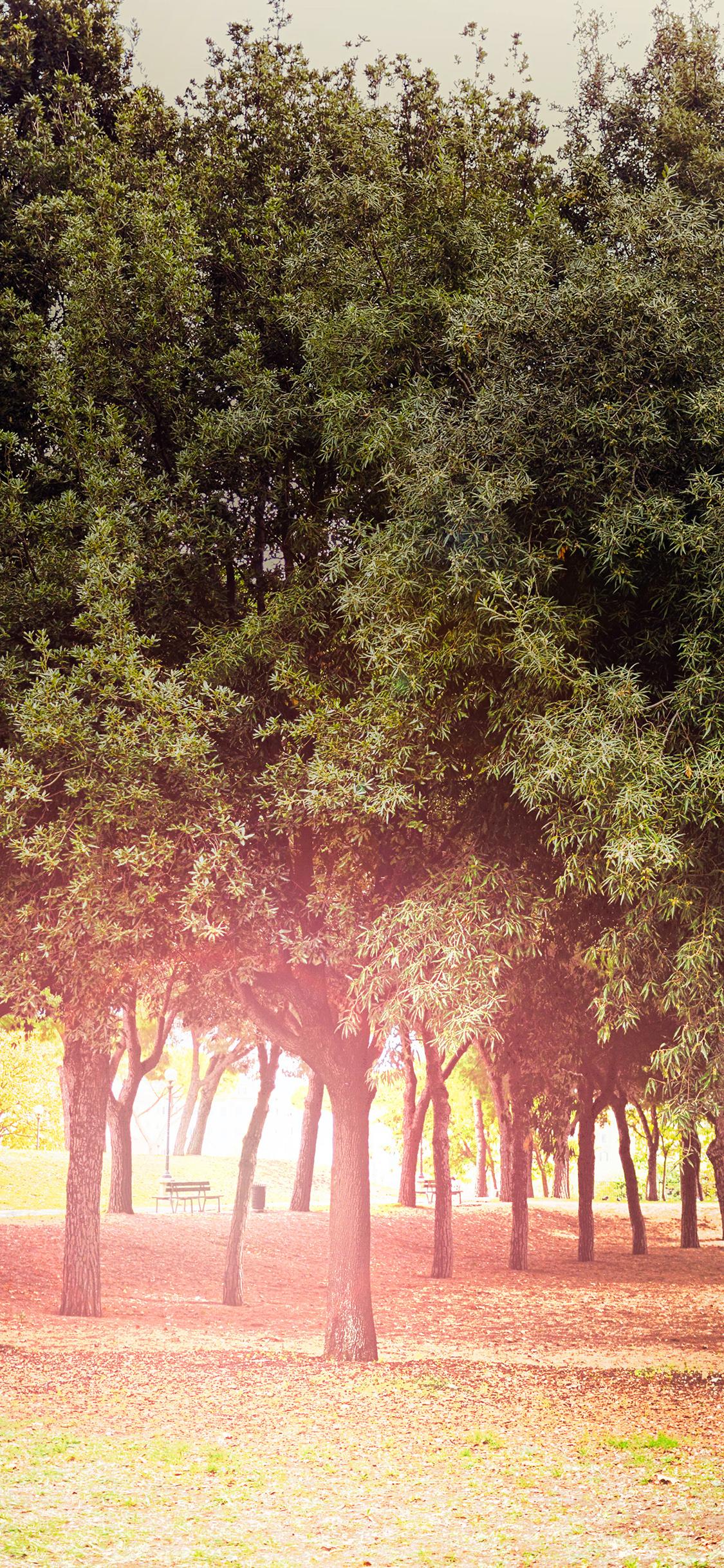iPhoneXpapers.com-Apple-iPhone-wallpaper-mt12-tree-wood-grass-garden-sun-light-nature-park