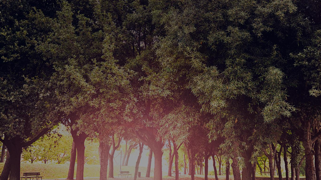 desktop-wallpaper-laptop-mac-macbook-air-mt13-tree-wood-grass-garden-dark-sun-light-nature-park-wallpaper