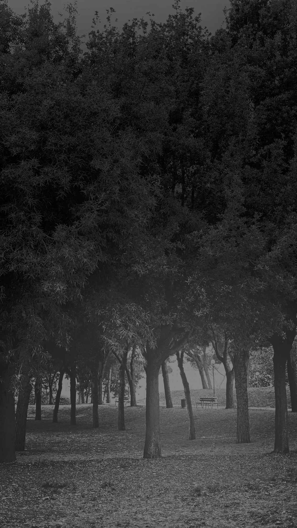 I Love Papers | mt14-tree-wood-grass-garden-dark-sun-light-nature-bw for Dark Vs Light Nature  153tgx