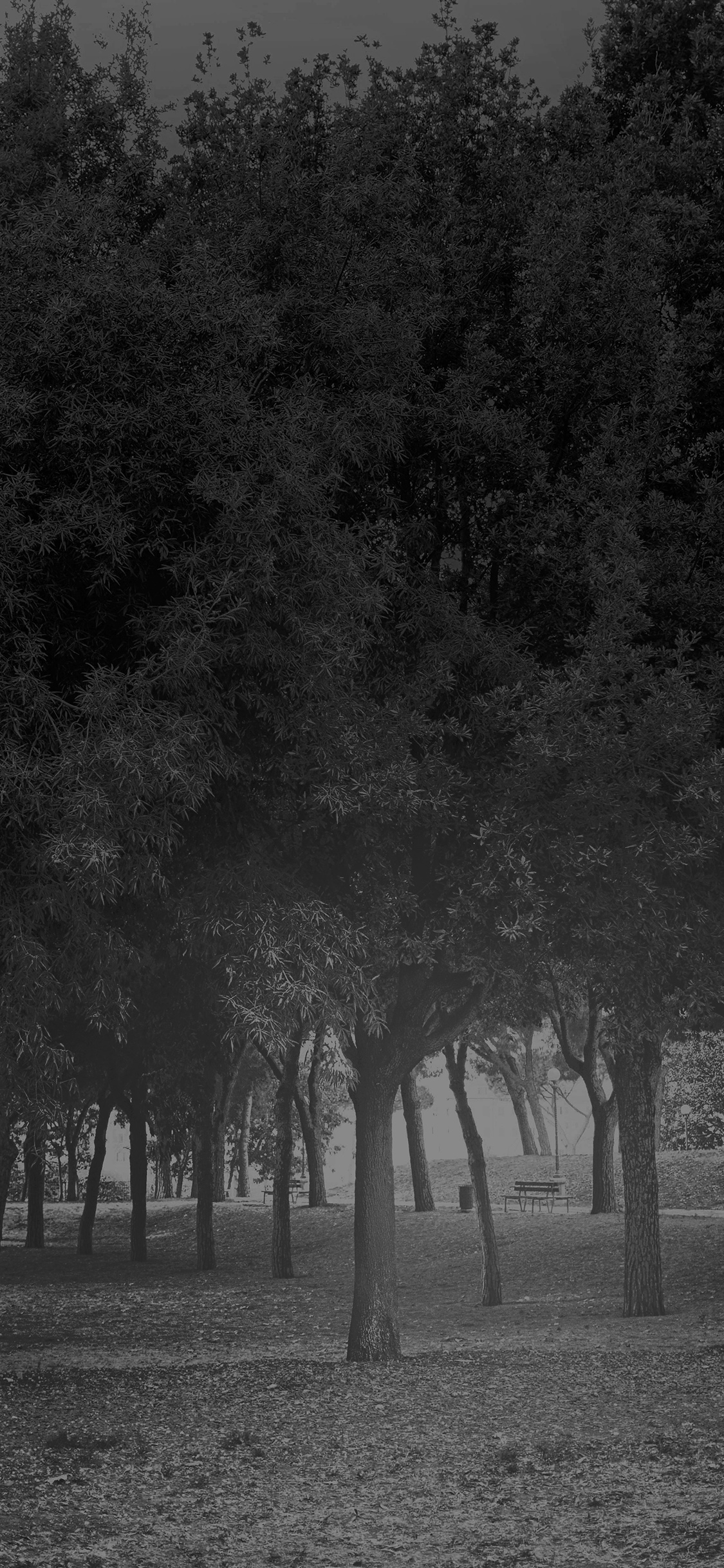 iPhoneXpapers.com-Apple-iPhone-wallpaper-mt14-tree-wood-grass-garden-dark-sun-light-nature-bw