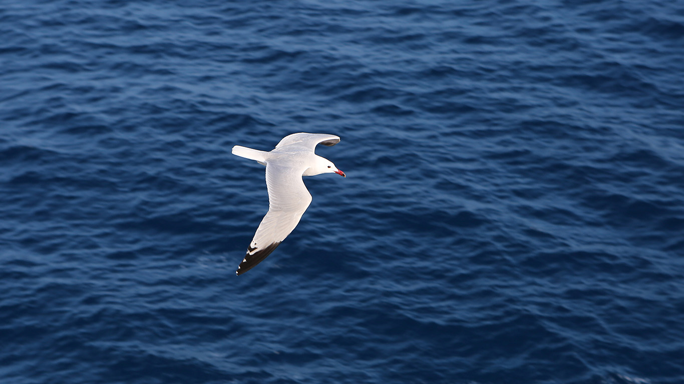 desktop-wallpaper-laptop-mac-macbook-airmt15-seagull-bird-sea-ocean-animal-nature-wallpaper