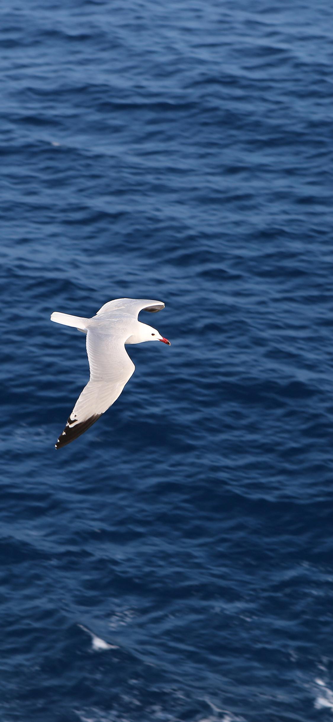 iPhoneXpapers.com-Apple-iPhone-wallpaper-mt15-seagull-bird-sea-ocean-animal-nature