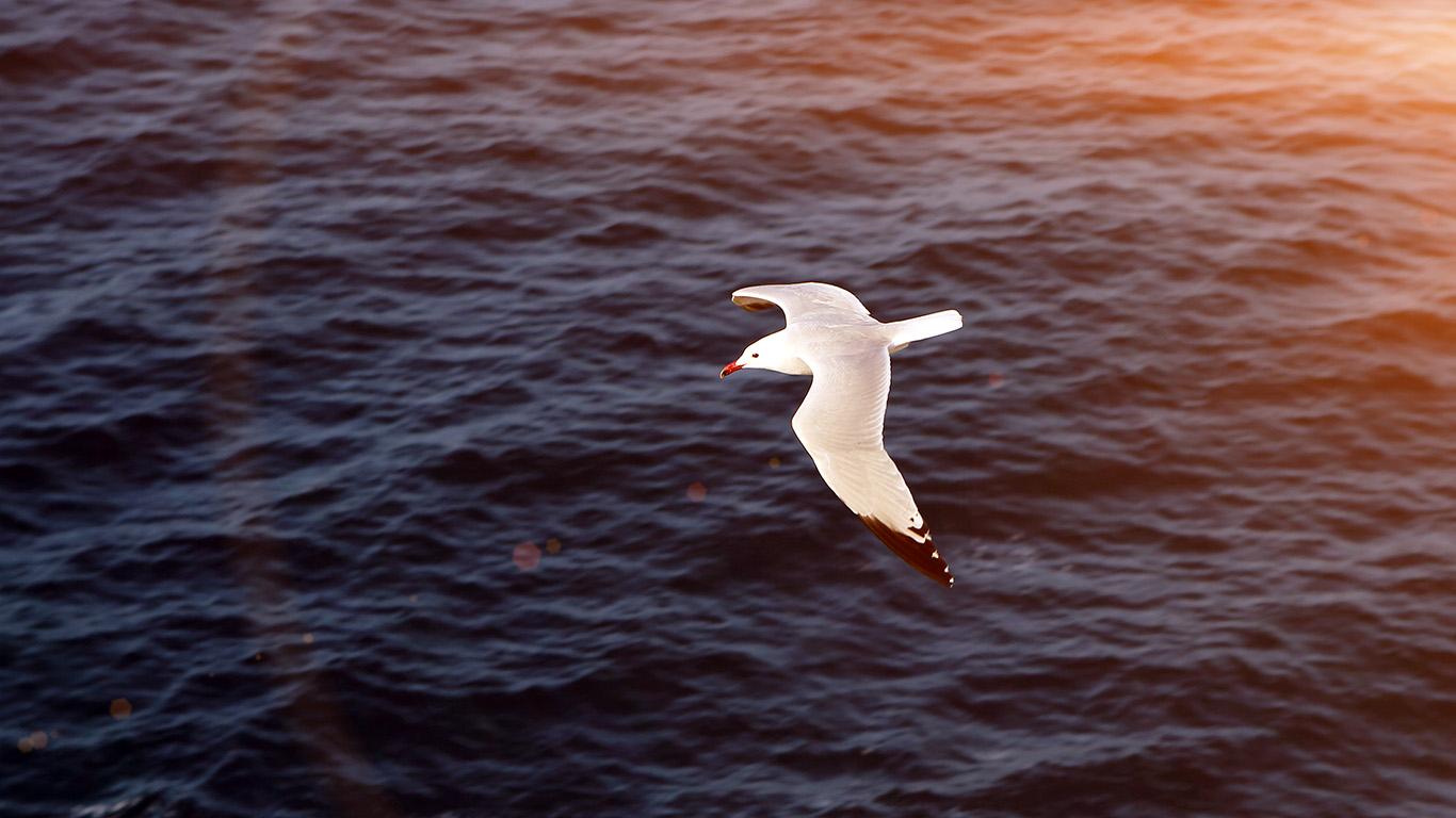 desktop-wallpaper-laptop-mac-macbook-airmt16-seagull-bird-sea-ocean-animal-nature-flare-wallpaper