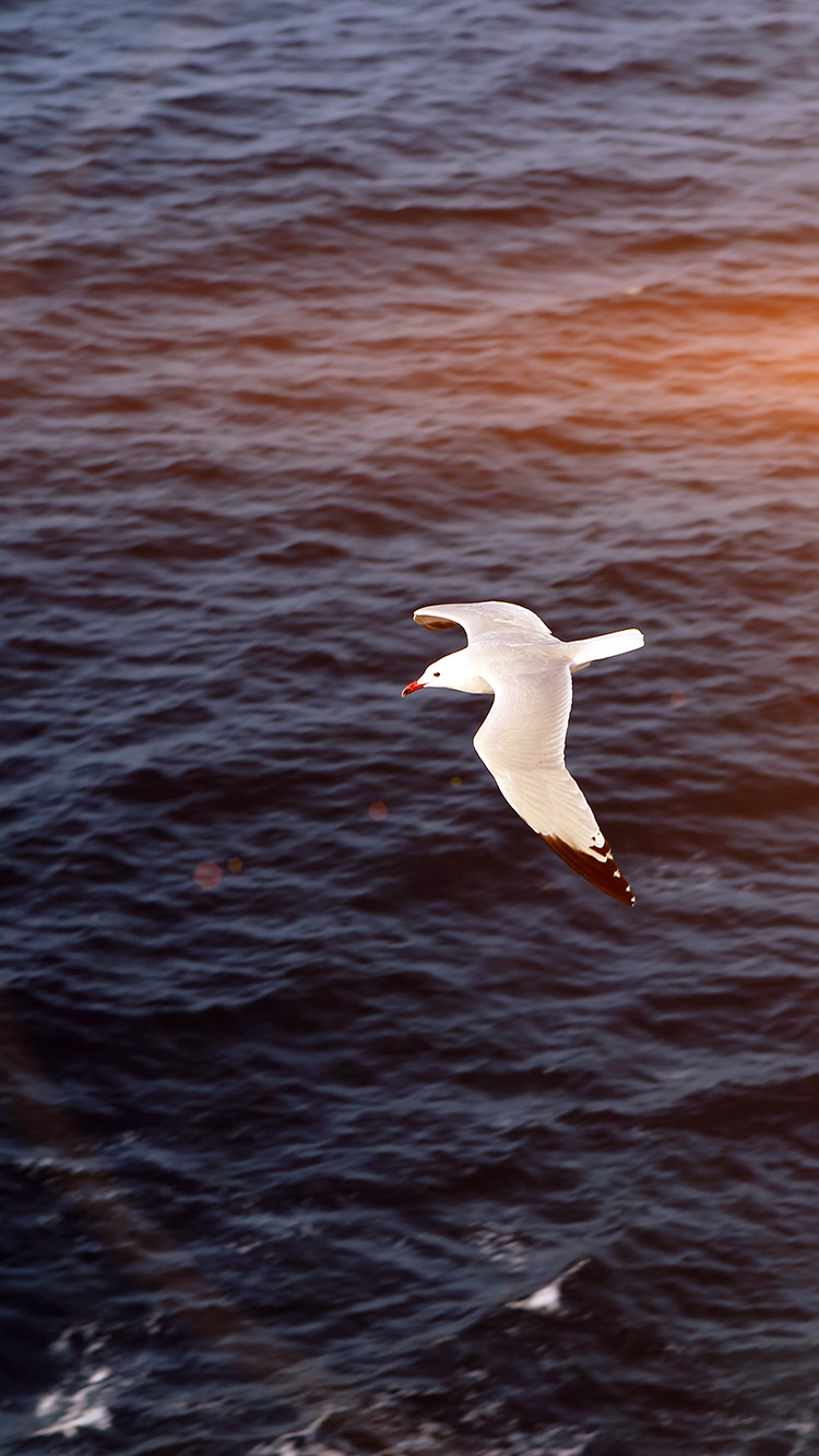 iPhonepapers.com-Apple-iPhone8-wallpaper-mt16-seagull-bird-sea-ocean-animal-nature-flare