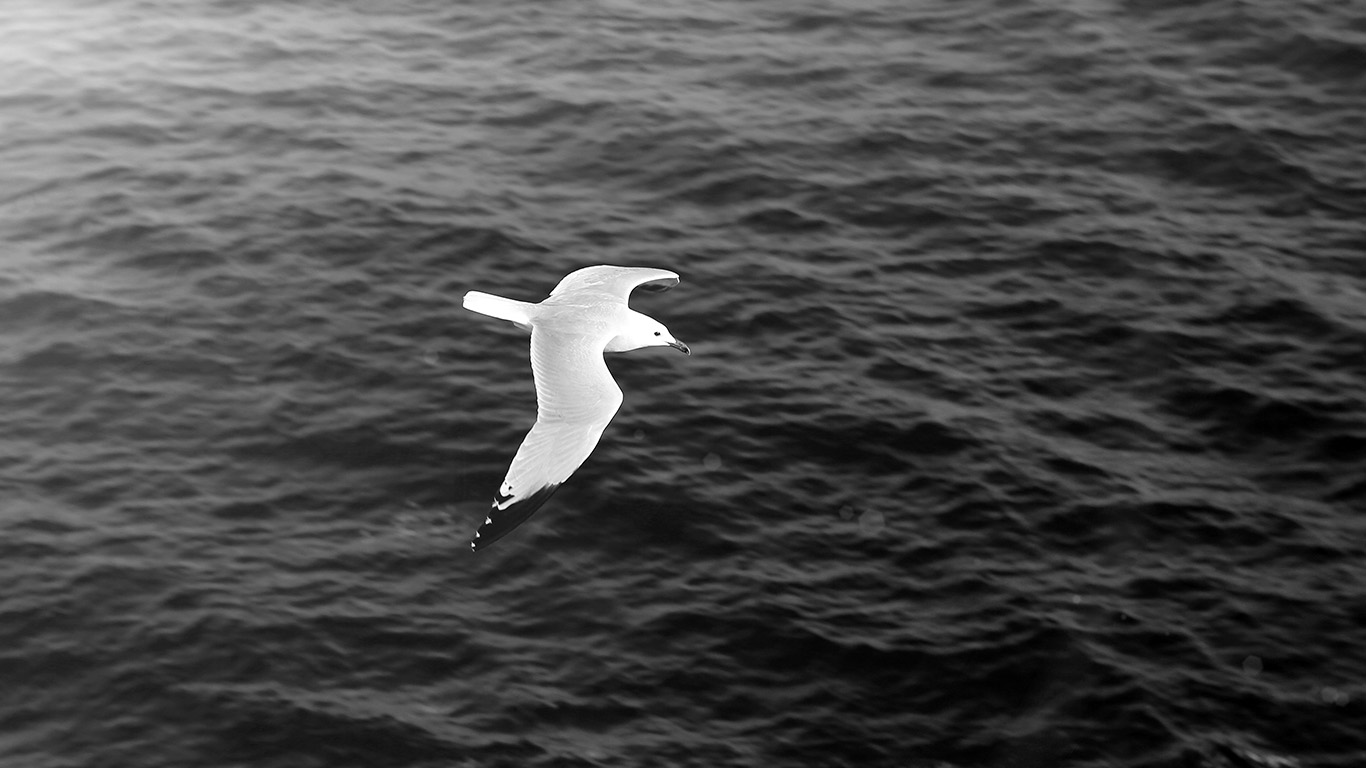 desktop-wallpaper-laptop-mac-macbook-air-mt17-seagull-bird-sea-ocean-animal-nature-dark-wallpaper