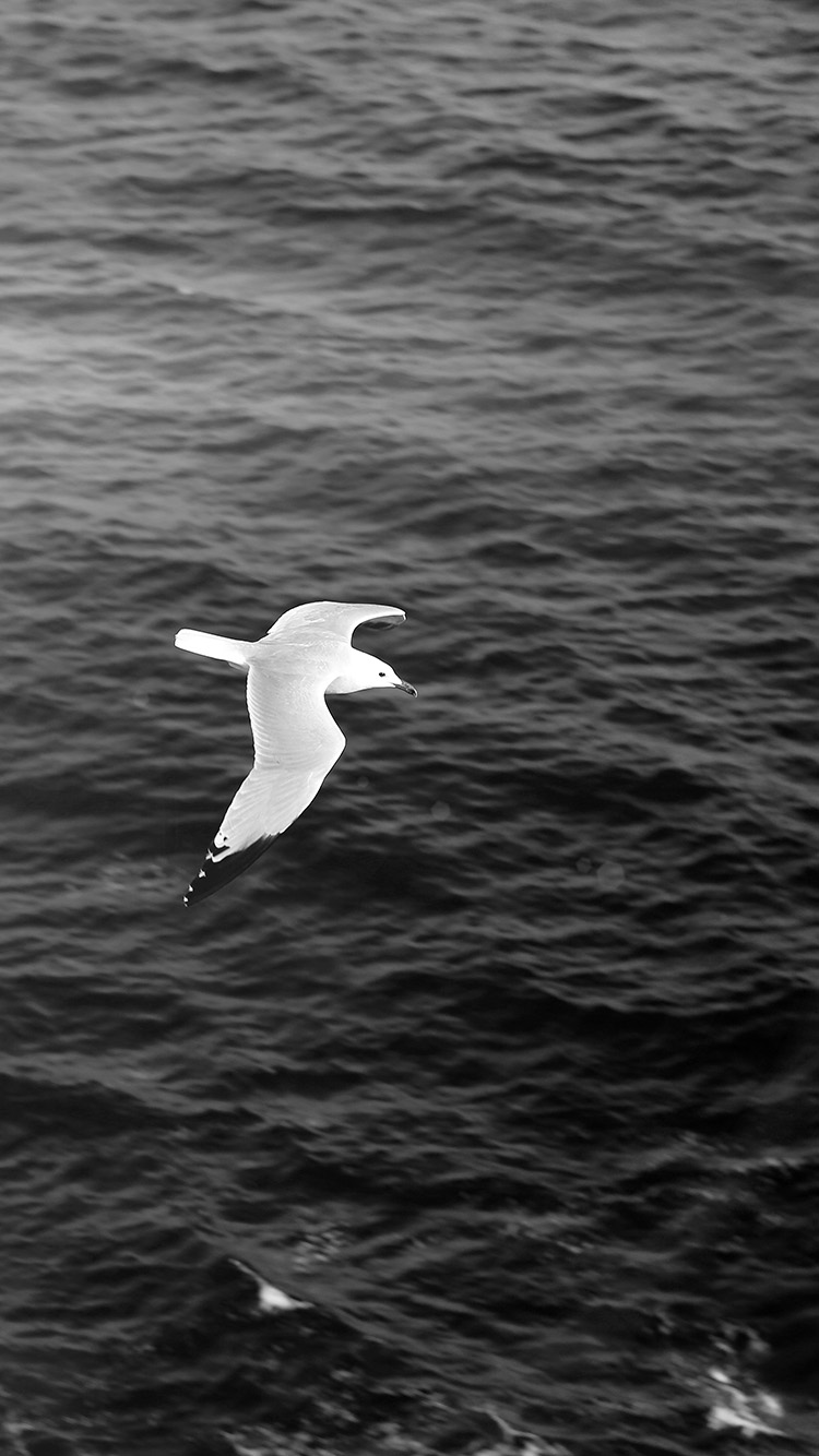 iPhone6papers.co-Apple-iPhone-6-iphone6-plus-wallpaper-mt17-seagull-bird-sea-ocean-animal-nature-dark