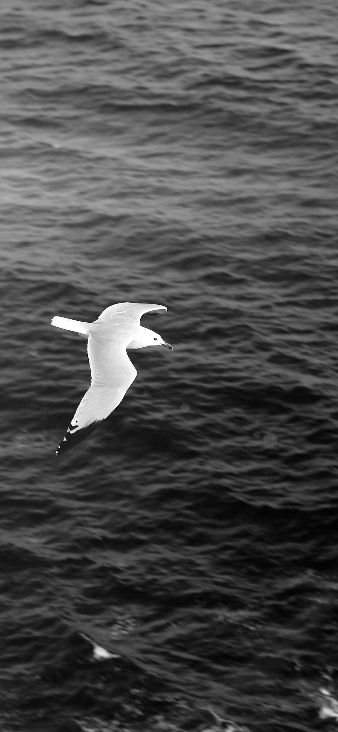 iPhoneXpapers.com-Apple-iPhone-wallpaper-mt17-seagull-bird-sea-ocean-animal-nature-dark