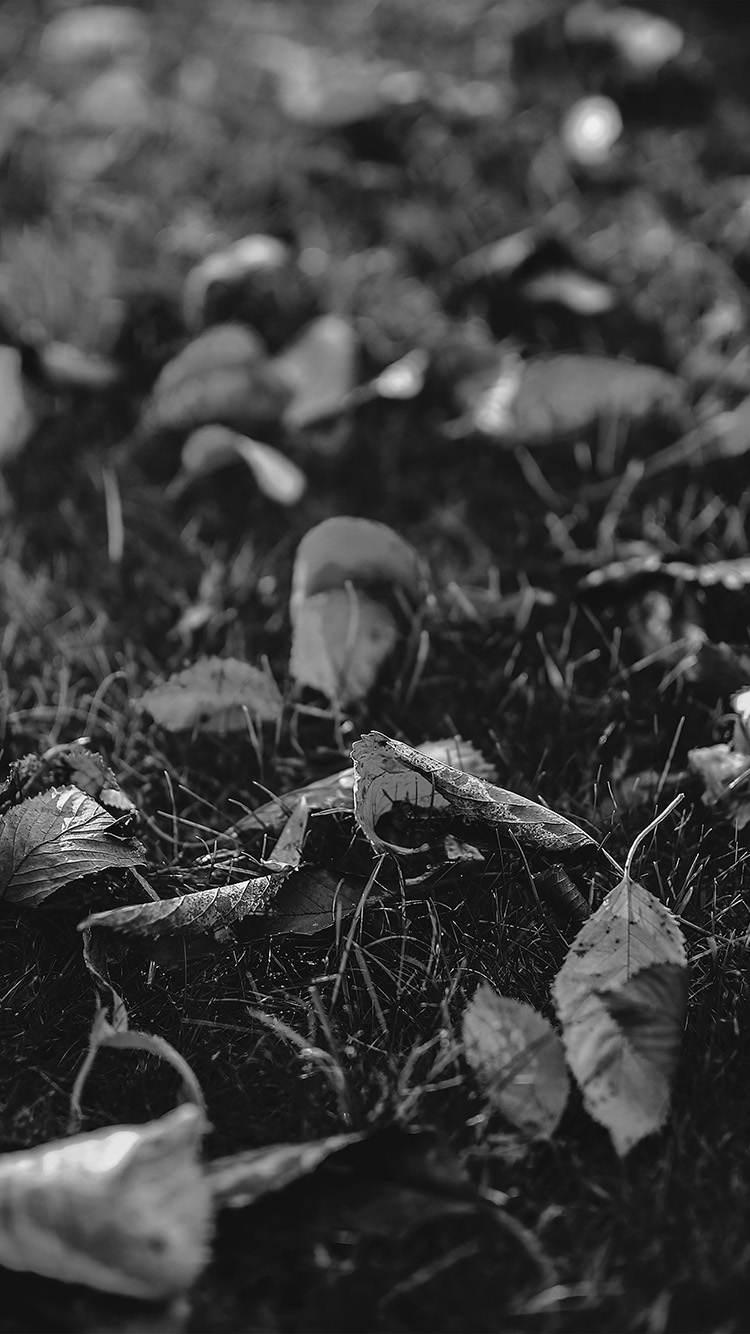 iPhonepapers.com-Apple-iPhone-wallpaper-mt28-fall-leaf-nature-green-backyard-blue-dark-bw