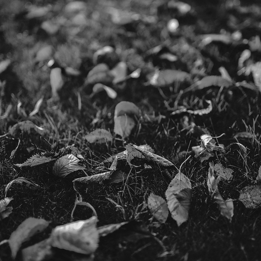 android-wallpaper-mt28-fall-leaf-nature-green-backyard-blue-dark-bw-wallpaper