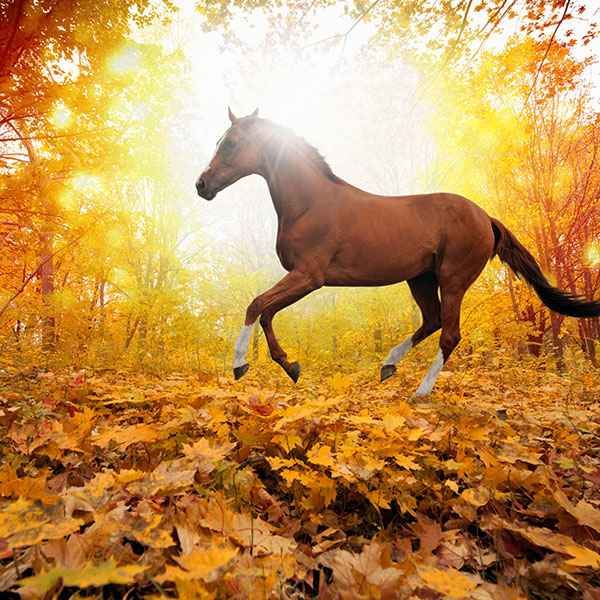 iPapers.co-Apple-iPhone-iPad-Macbook-iMac-wallpaper-mt30-horse-art-animal-fall-leaf-mountain-red-wallpaper