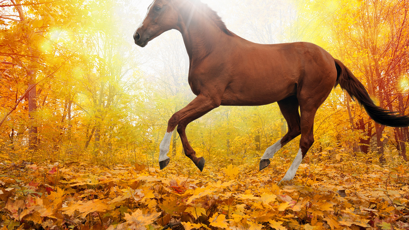Wallpaper For Desktop Laptop Mt30 Horse Art Animal Fall Leaf Mountain Red