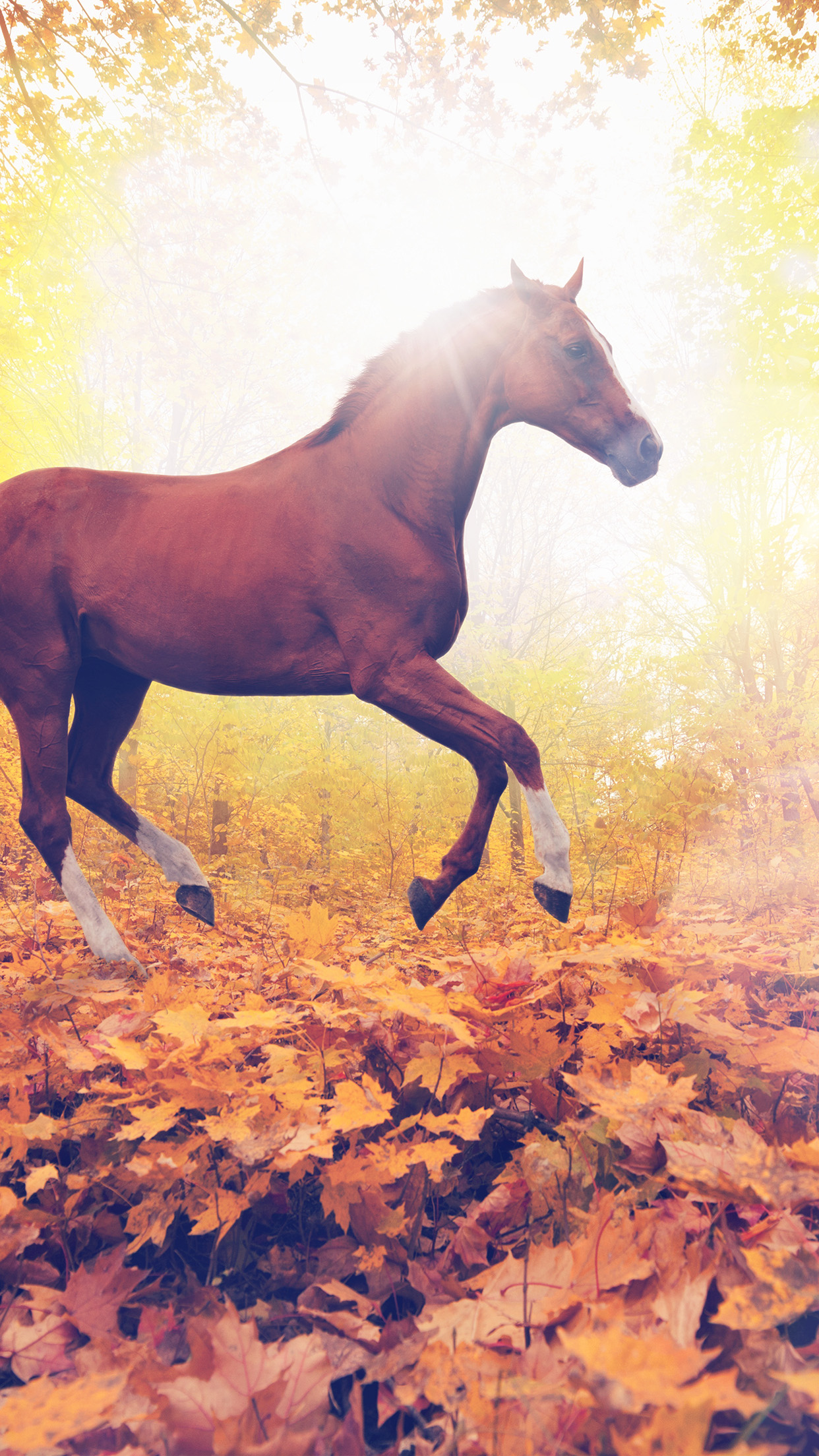 Papers Co Iphone Wallpaper Mt31 Horse Art Animal Fall Leaf Mountain Red Flare