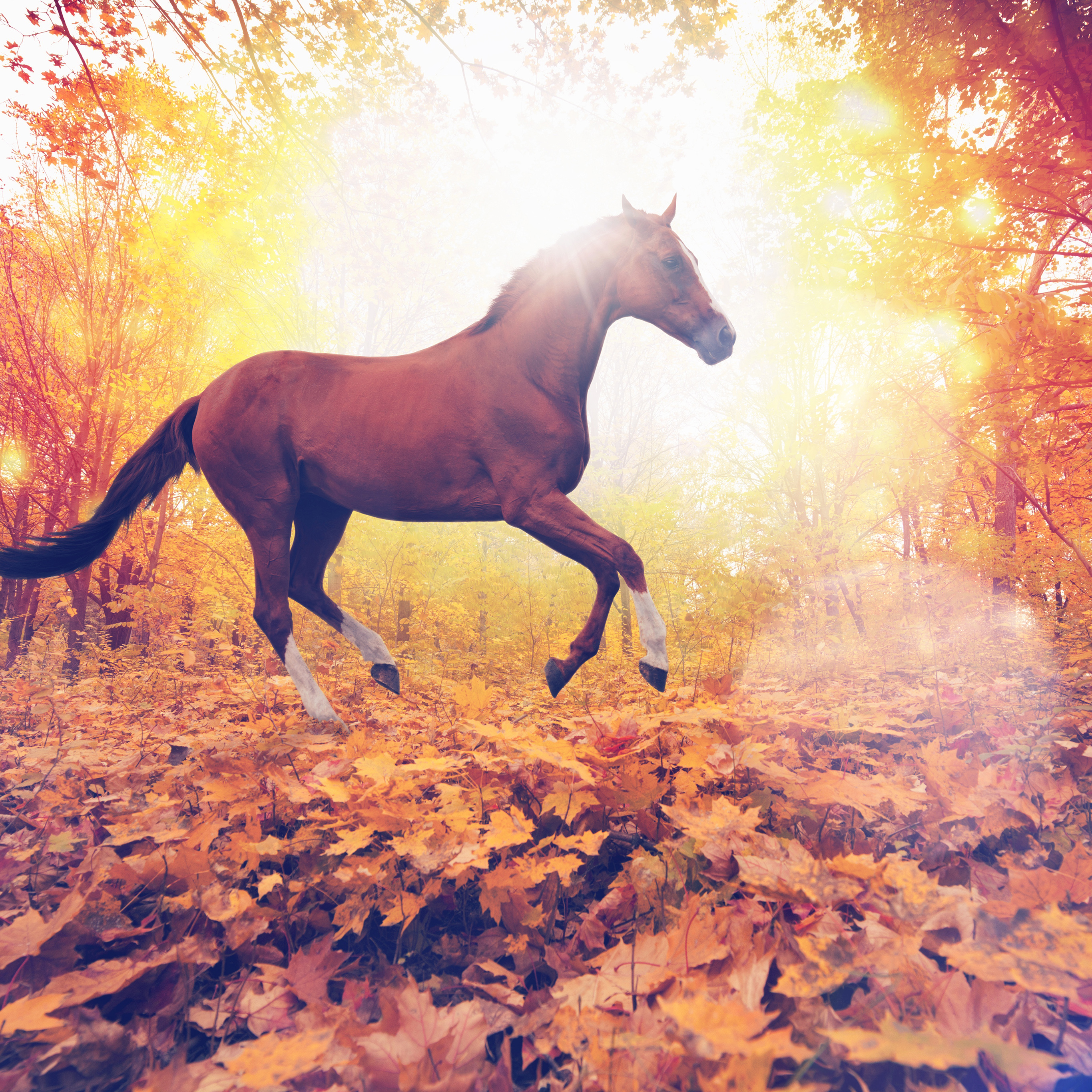 Mt31 Horse Art Animal Fall Leaf Mountain Red Flare Wallpaper