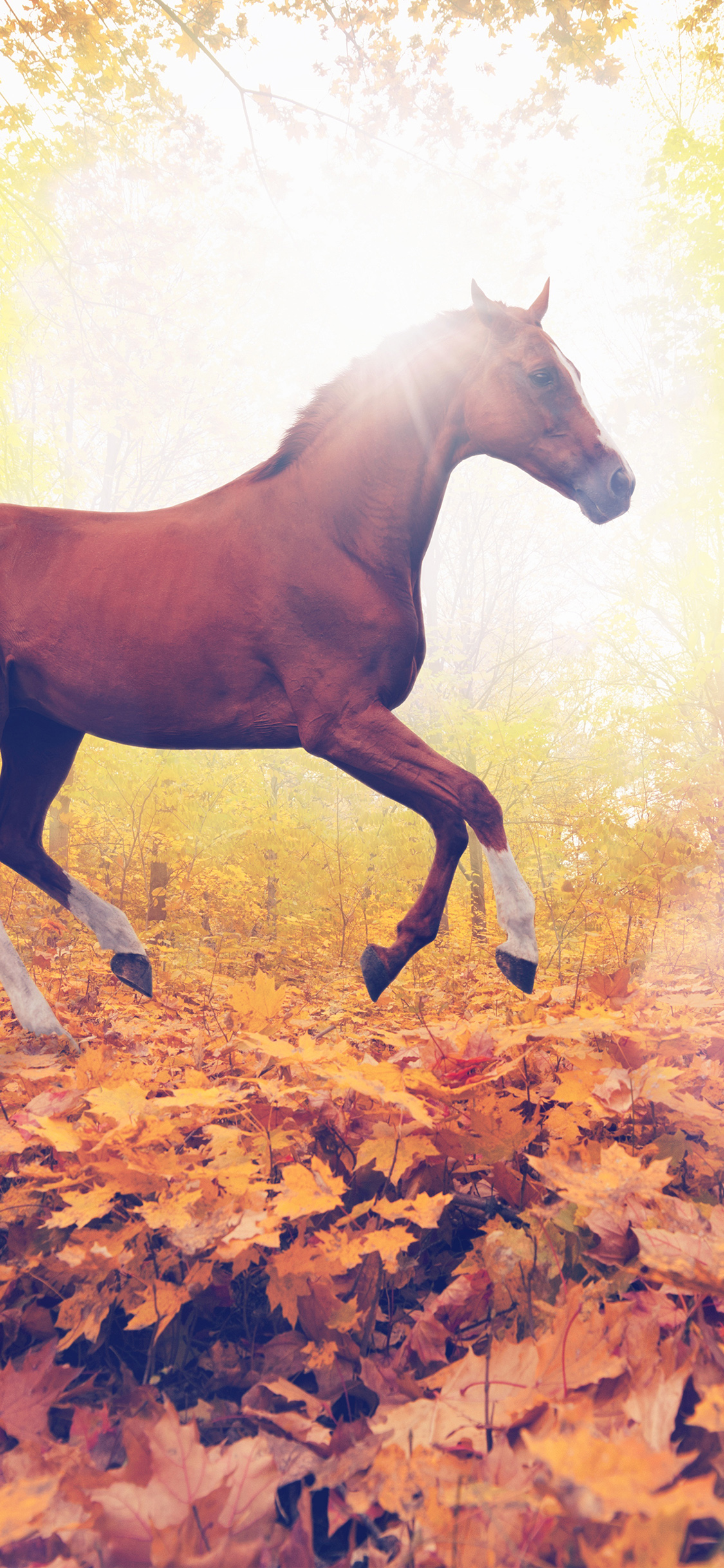 iPhonexpapers.com-Apple-iPhone-wallpaper-mt31-horse-art-animal-fall-leaf-mountain-red-flare